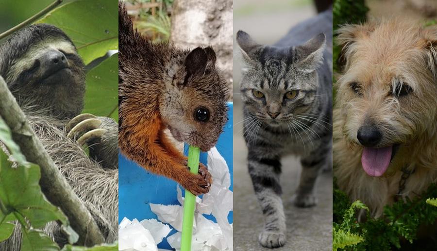 El Sinac y la UCR abren un proceso participativo para atender las interacciones de los animales en el campus